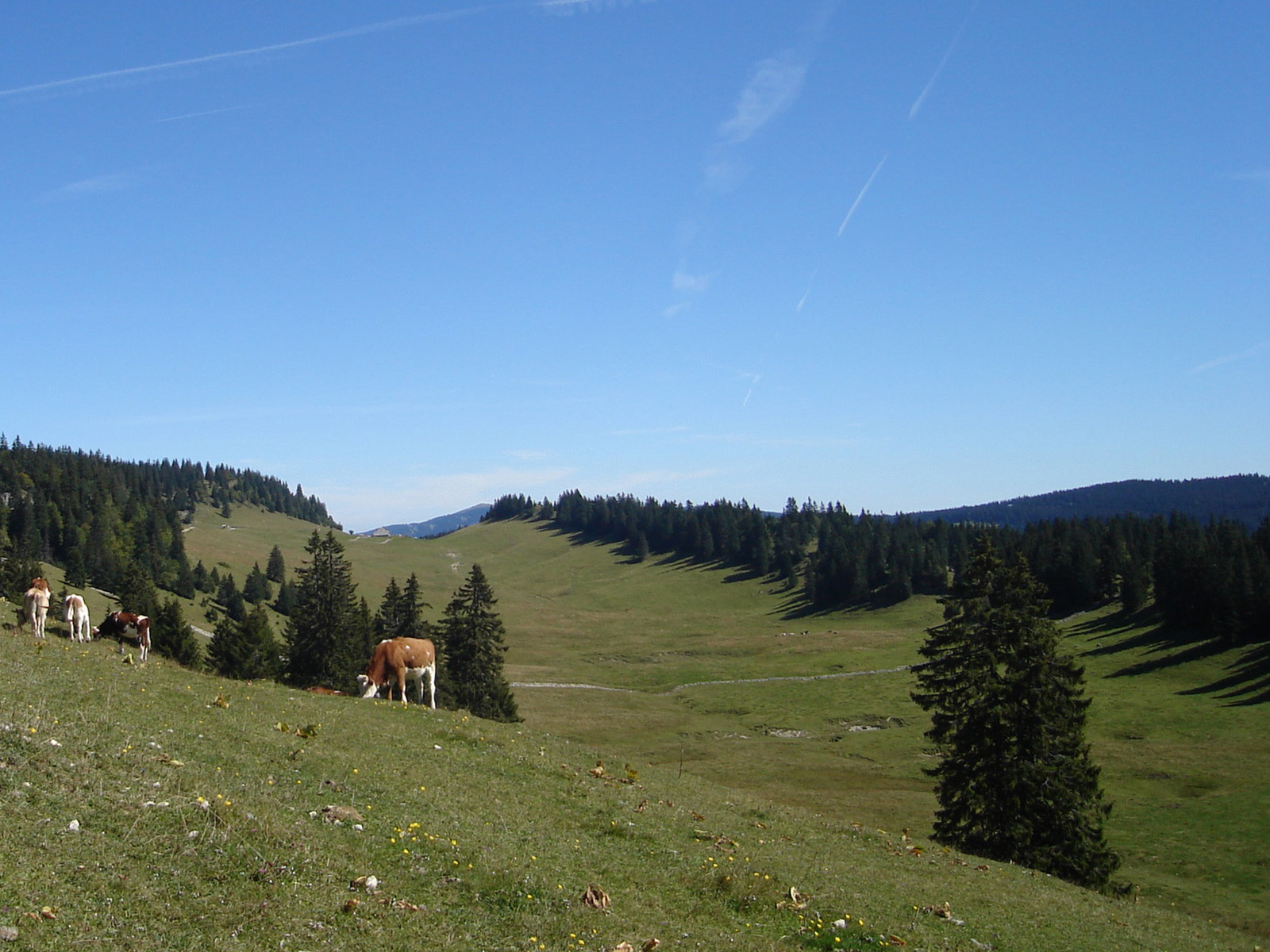 Combe anticlinale des Begnines, Jura vaudois