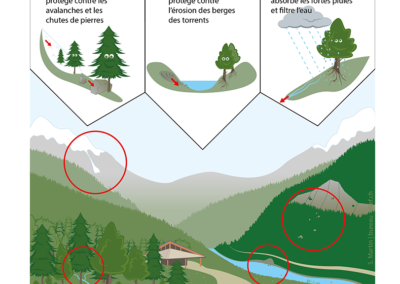 Rôle de protection de la forêt
