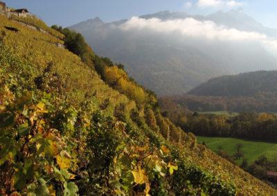 Valorisation du terroir viticole