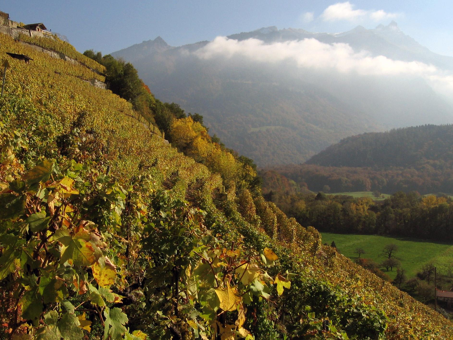 Vignoble d'Antagnes