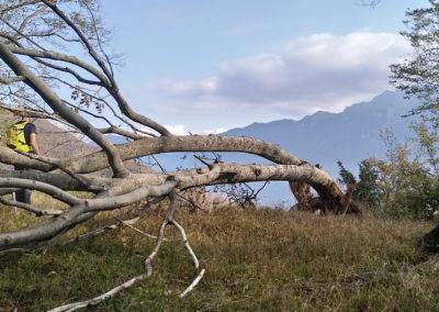 Visite au Monte San Giorgio